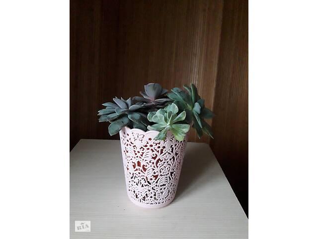 купить бу Офисные растения, стильно и эко в Тернополе