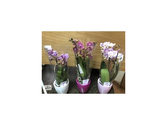 бу Орхідеї міні в керамічних горщиках в Львові