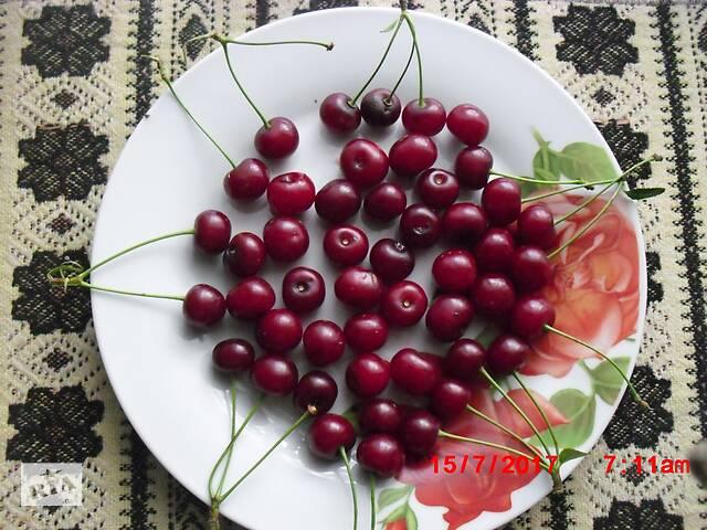 Продам двухлетние и трехлетние саженцы вишни украинского.