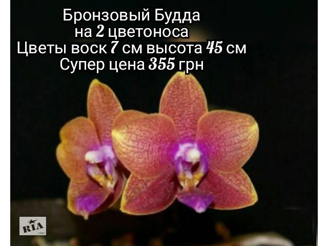 Цветущие орхидеи в наличии и под заказ- объявление о продаже  в Курахово