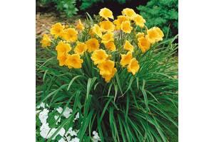 Цветы для вашего сада