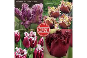 Тюльпаны набор Эксклюзив
