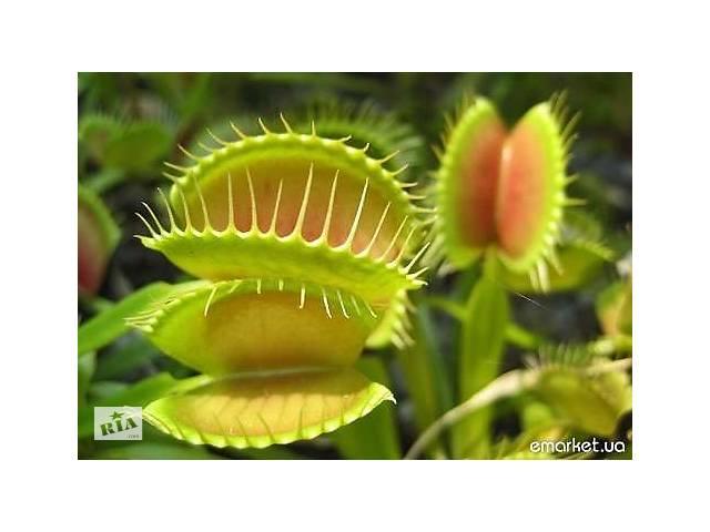 Выставка растений-хищников в Мелитополе Дионея Росянка Непентес- объявление о продаже  в Мелитополе