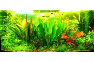 Живі рослини для акваріумів