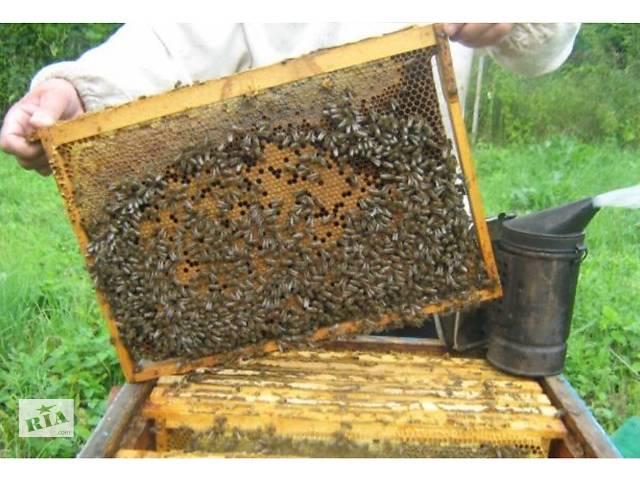 Бджолопакети -Карпатка,  Бджоли,Бджолосімї, Бджолопакети, Доставка по Україні- объявление о продаже  в Стрые