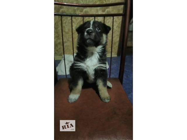 Бесплатно одам щенков- объявление о продаже  в Виннице