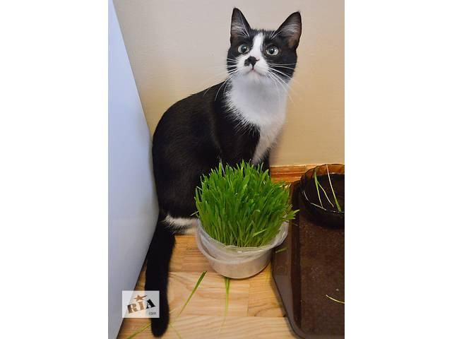 продам Черно-белый котенок ищет дом бу в Киеве