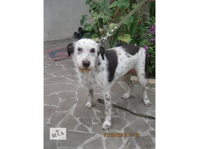 купить бу Далмочка - жизнерадостная,преданная собака в Харькове