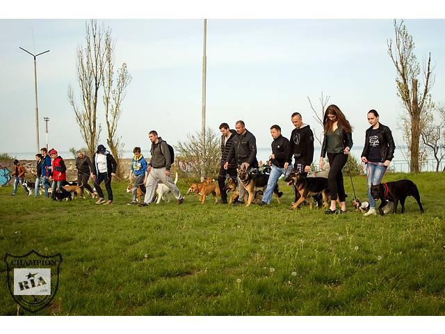 купить бу Дрессировка собак Клуб CHAMPION  в Украине