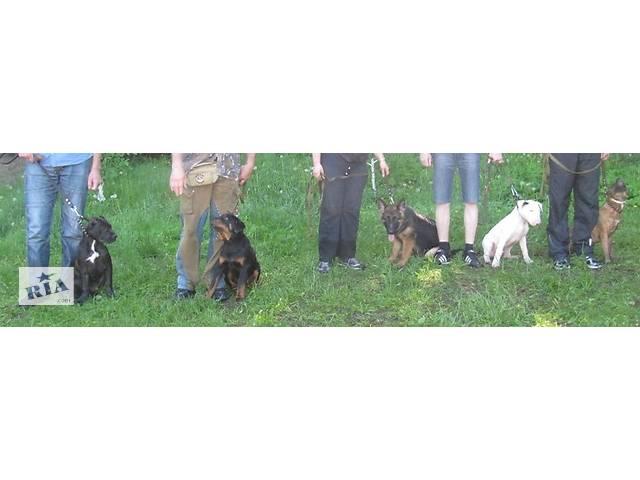 купить бу Дрессировка собак индивидуально в Киеве и пригороде  в Украине