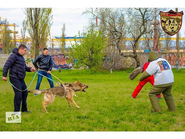 купить бу Дрессировка собак Одесса в Одессе