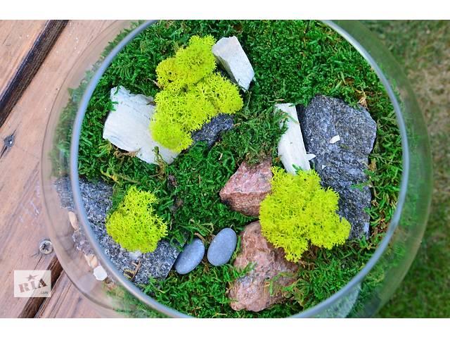 продам Флораріум з стабілізованого моху. Акція всим подарунок. Healthy Plants  бу в Киеве