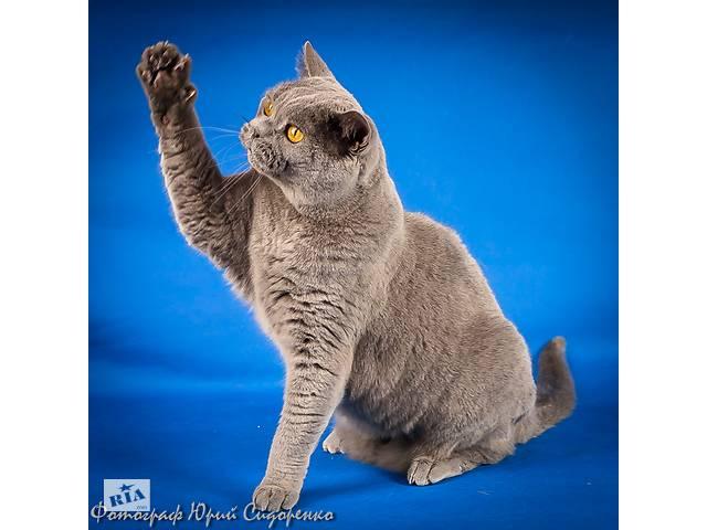 Фотограф анималист для ваших домашних животных.- объявление о продаже   в Украине