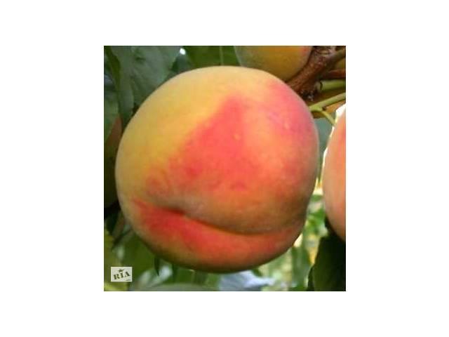 купить бу персик Вардени в Бахмуте (Артемовск)
