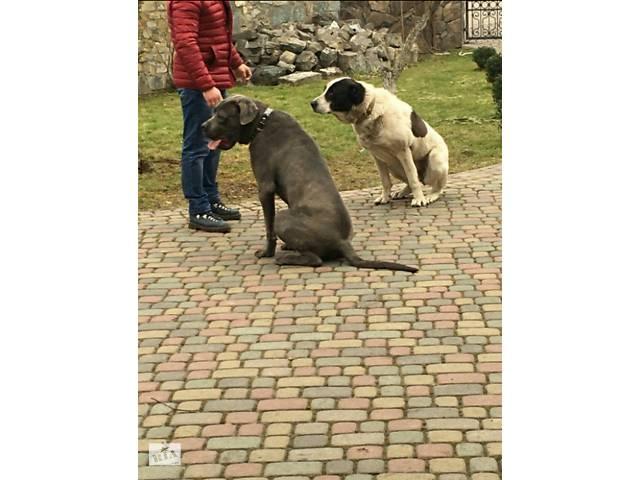 Дресировка собак!- объявление о продаже   в Украине