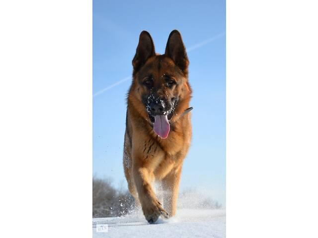 продам Вигул собак бу в Ковеле