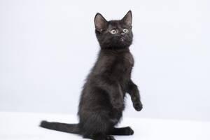 Отдам в хорошие руки котенка девочку Барбару.