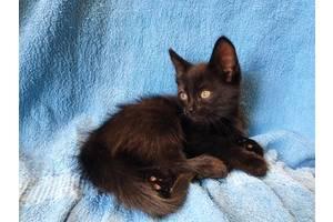 """Хвостики из банды """"Черная кошка"""" ищут именно вас"""