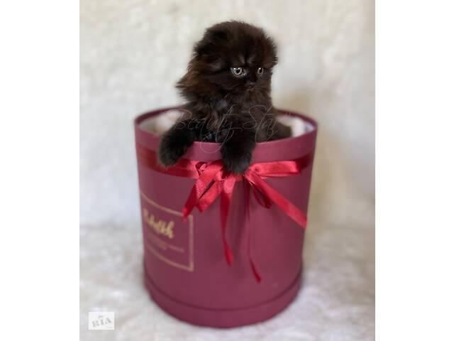 продам котята бу в Харькове