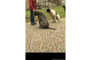 Дрессировка собак в Ивано-Франковске