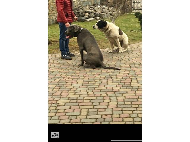купить бу Дрессировка собак в Ивано-Франковске в Ивано-Франковске
