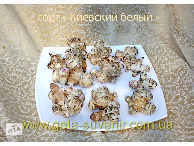 купить бу Топинамбур  (земляная груша)отборной крупный  для еды в Белой Церкви