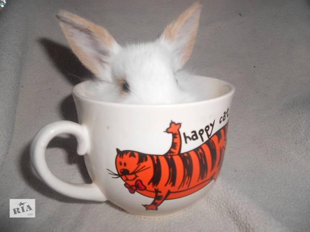 купить бу Карликовые крольчата почти даром в Харькове