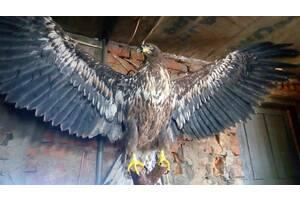 Изготовление чучел птиц и зверей