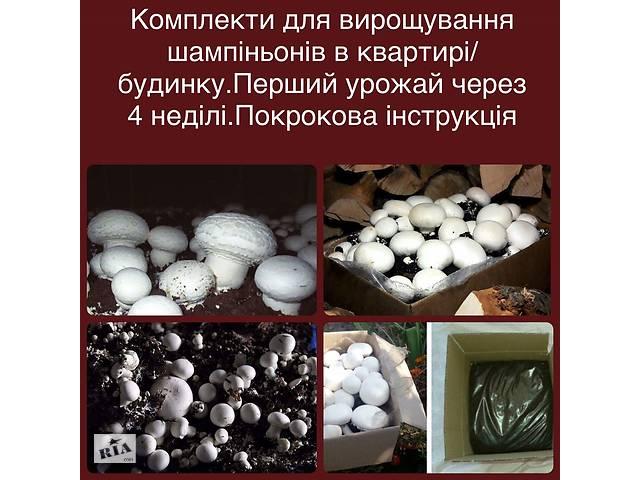 Комплекти для вирощування шампіньйонів у квартирі