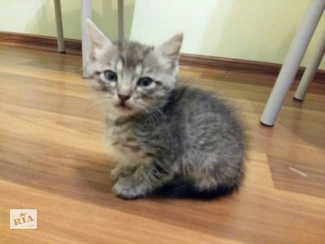 Кошенята даром- объявление о продаже  в Черновцах