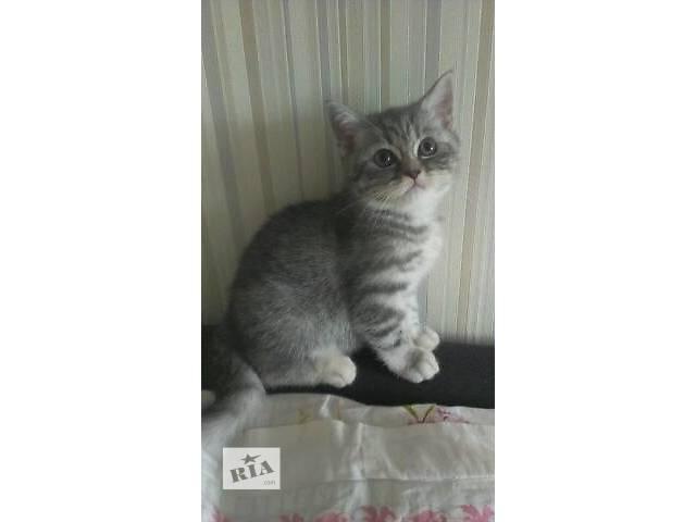 купить бу Кошки, коты, котята в Виннице
