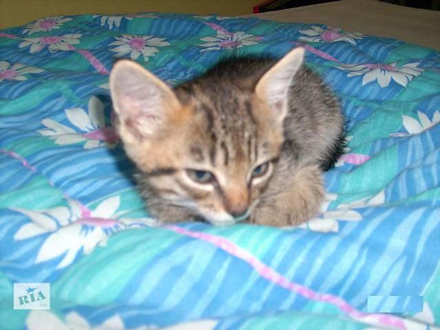 котенок тигровый окрас, отдам- объявление о продаже  в Виннице