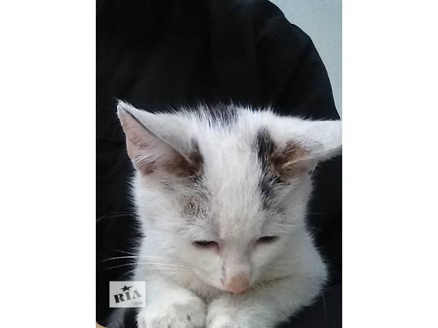 Котик 3,5 месяца в добрые руки- объявление о продаже  в Ирпене