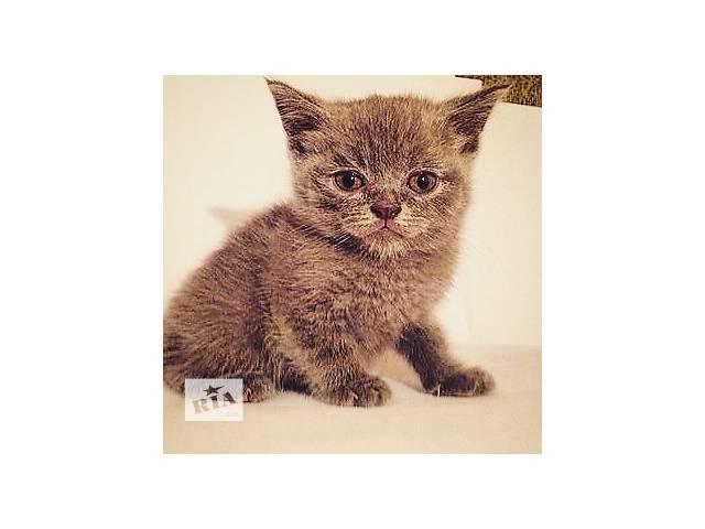купить бу Красивейшие  котята  в Киеве