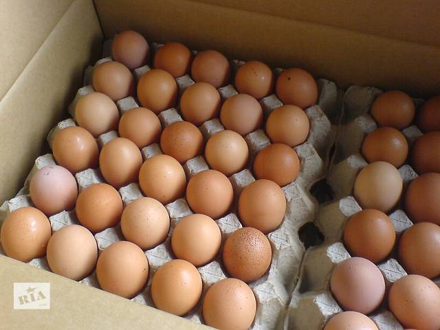 бу Недорого куриные яйца категории c-1 и с-0 в Киеве