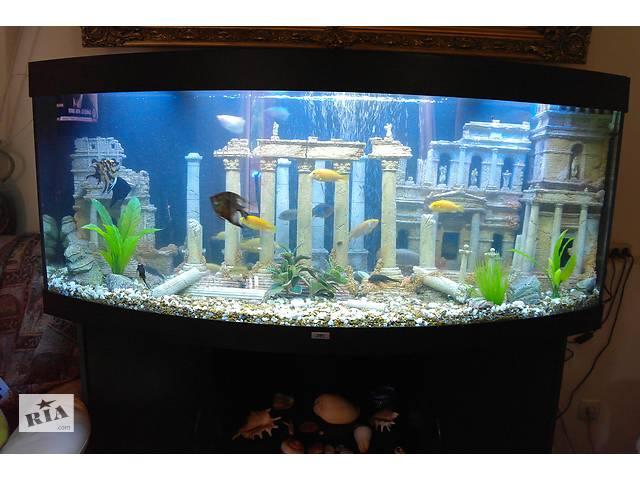 Обслуживание аквариума(недорого),чистка аквариума- объявление о продаже  в Киеве