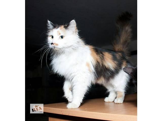 купить бу Очаровательная кошечка Сюзанна в поисках дома! в Киеве