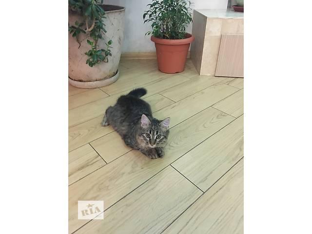 бу Очаровательный и ласковый котенок в Одессе