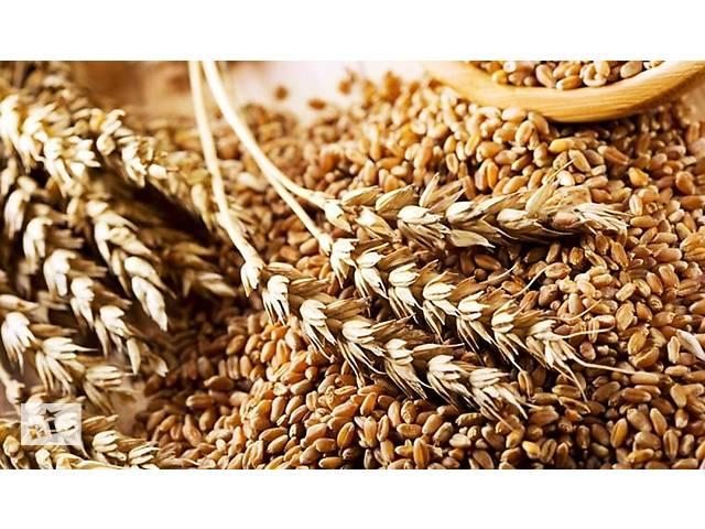 Очистка зерна – рапс, пшеница, ячмень, подсолнечник, кукуруза.- объявление о продаже   в Украине