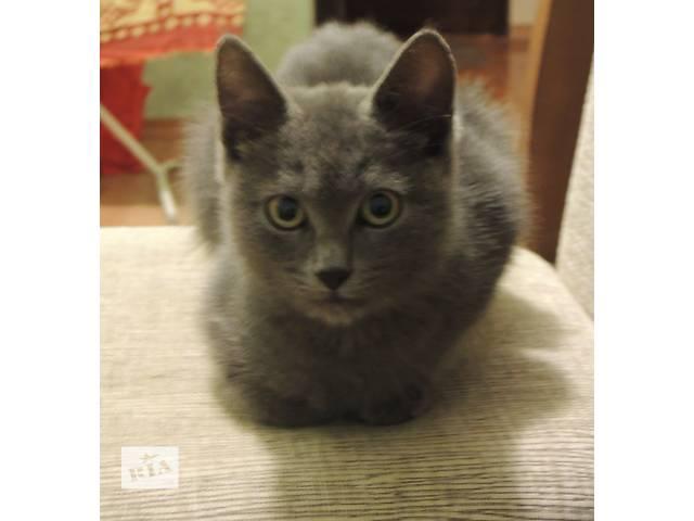купить бу Отдам котеночка, похож на русскую голубую в Киеве