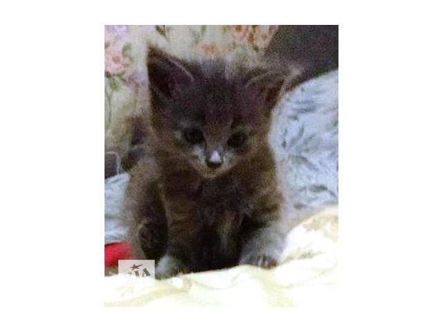 продам Отдам котят в добрые руки калининский р-н бу в Донецке