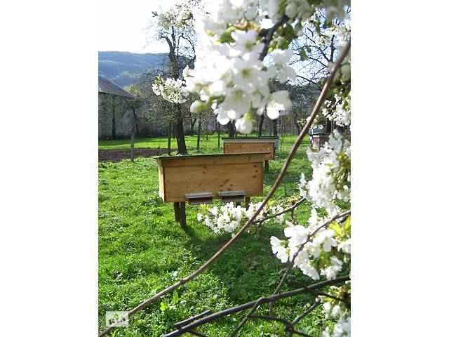 Бджолопакети (пчелопакеты) Карпатка