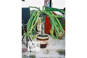 Екзотичні рослини