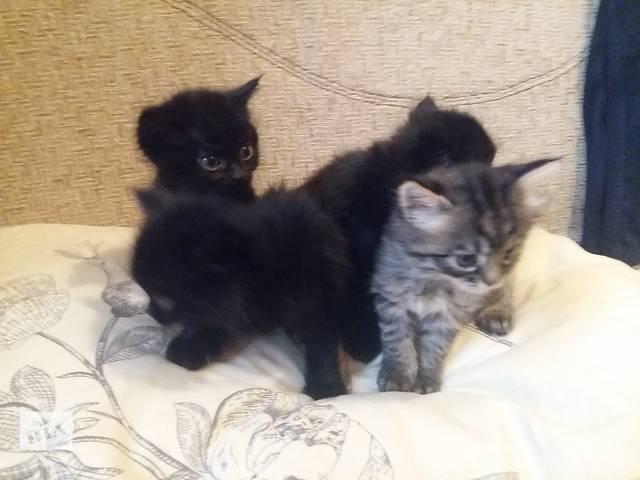 Подарю домашних котят!- объявление о продаже  в Днепре (Днепропетровск)
