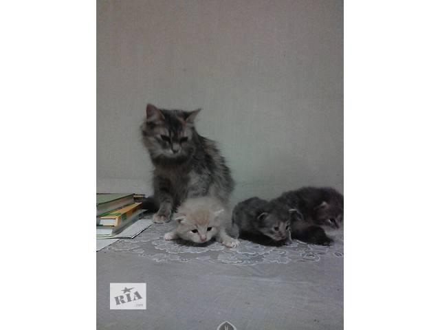 Подарю котенка- объявление о продаже  в Харькове