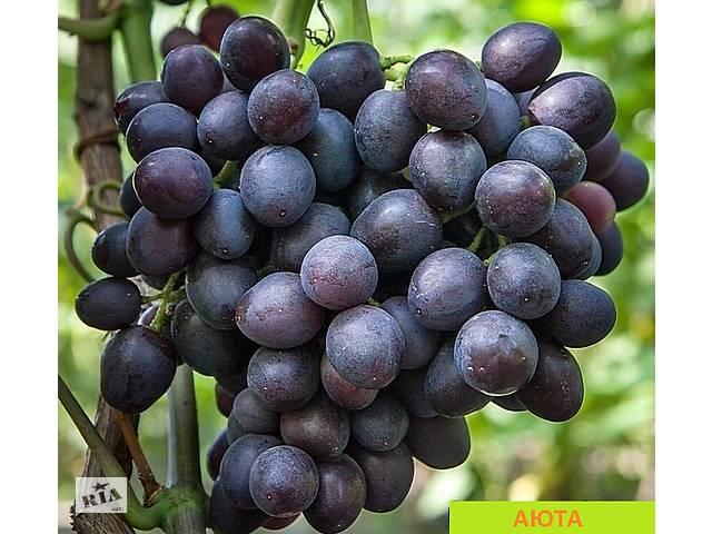 купить бу Саженцы винограда Аюта в Новой Каховке