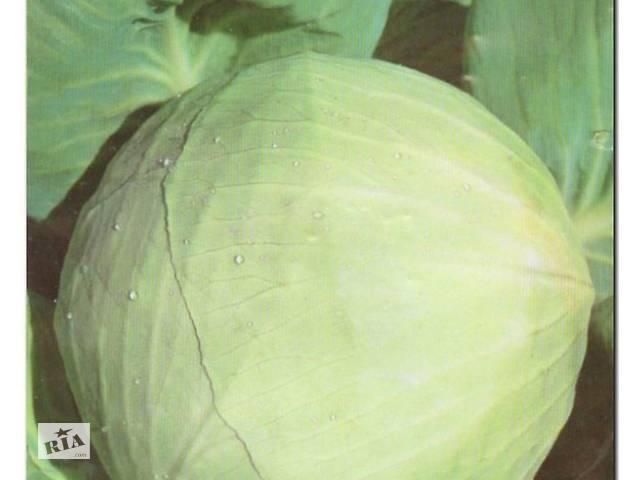 бу Семена капусты разных сортов в Фастові