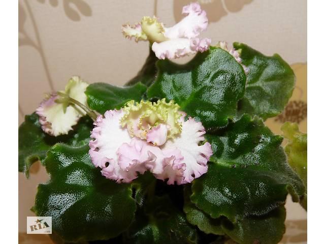 купить бу ЛЕ-Зелёная роза в Запорожье