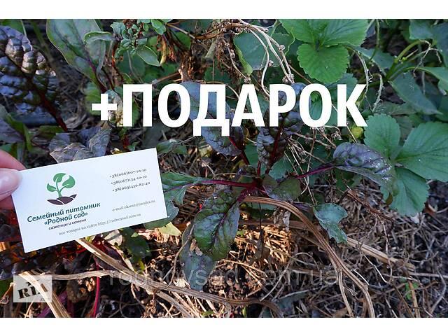продам Мангольд семена 10шт (листовая свекла, римская капуста, свекольник) насіння листковий буряк бу в Андріївці