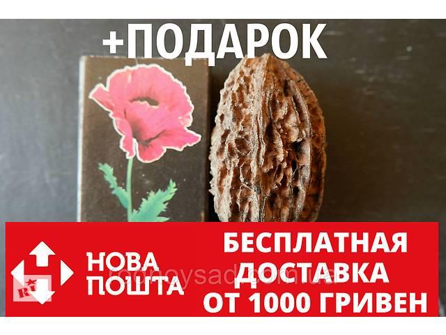 купить бу Орех серый семена (10 штук) для саженцев, Júglans cinérea горіх сірий насіння (родственник грецкого) в Андреевке